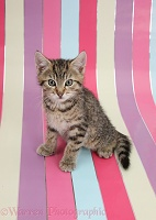Cute tabby kitten, sitting on stripy background