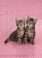 Cute tabby kittens, sitting on starry background