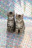 Cute tabby kittens, sitting on background