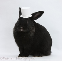 Black rabbit wearing a white top hat