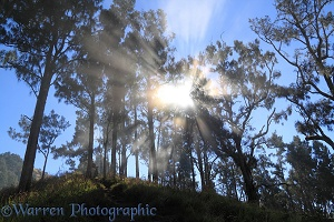Sunbeams in clouds and trees at Rinjani