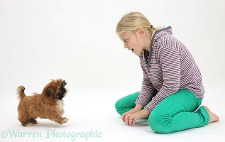 Girl playing with Shih-tzu puppy
