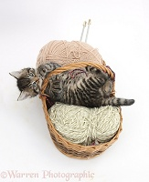 Naughty tabby kitten in a wool basket