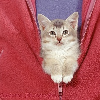 Kitten zipped into front of jacket