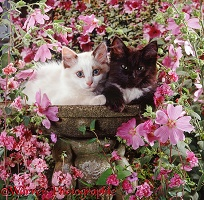 Kittens on empty bird bath among flowers