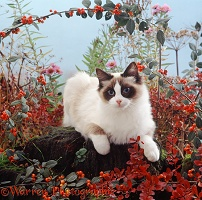 Cat among autumn plants