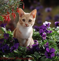 Ginger cat among flowers