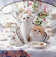 Cosy kittens with china tea set