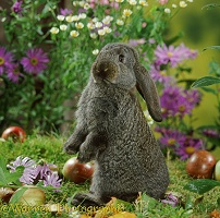 Steel French Lop baby rabbit among flowers