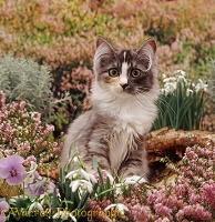 Kitten among winter heaths and flowers