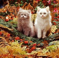 Kittens among autumn bracken and berries