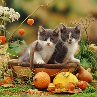 Two kittens in a garden trug