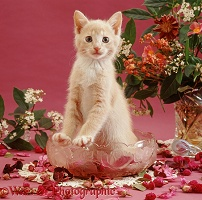 Ginger kitten in pot pourri bowl