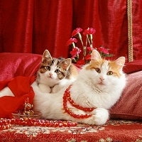 Mother Turkish Van cat and kitten with beads