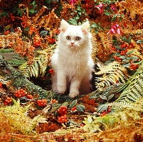 Kitten among autumn bracken and berries