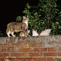 Mother cat and kittens on a garden brick wall