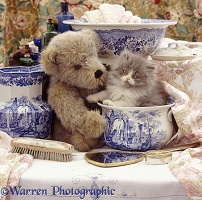 Kitten and teddy in wash-stand set
