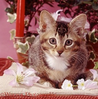 Ticked tabby kitten with flowers