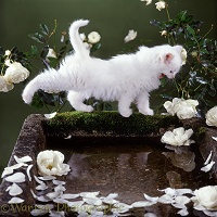 White kitten stretching by bird bath