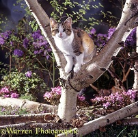 Calico cat up a tree
