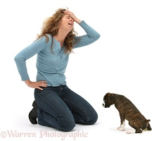 Lady disparing at Boxer puppy peeing on floor