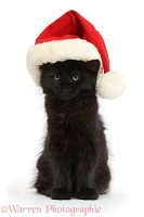 Fluffy black kitten, 9 weeks old, wearing a Santa hat