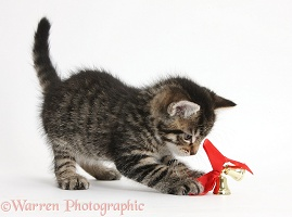 Cute tabby kitten playing with Christmas bells