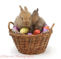 Baby rabbits in a basket with Easter eggs