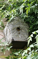 Wasp nest in a bird box