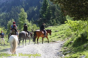 Pony trekking, French Pyrenees