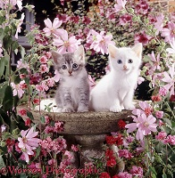 Tabby and white kittens in empty bird bath among flowers