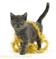 Grey kitten with yellow tinsel