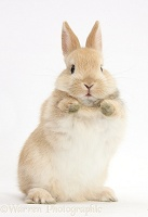 Bunny with paws up