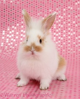 Cute baby bunny, sitting on pink starry background