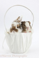 Young rabbit and frizzy Guinea pig in a basket