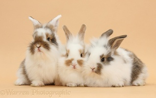 Three bunnies on beige background