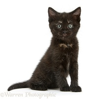 Black kitten sitting