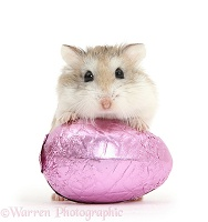 Roborovski Hamster and Easter egg