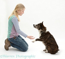 Girl offering to shake paws with dog