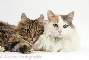 Two cats lying together