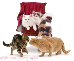 Group of Cats around a child's chair