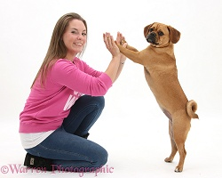Puggle and lady holding hands