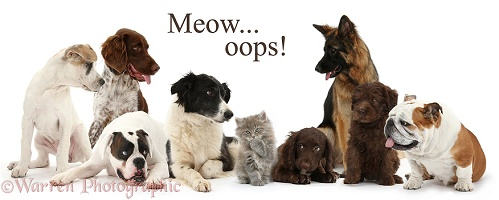 Cat and dogs - Meow oops
