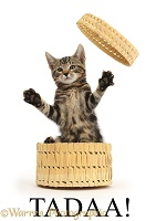 Tadaa - tabby kitten bursting out of a basket - Tadaa