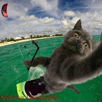 Kite surfing cat selfie