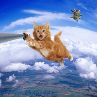 Sky diving cat selfie