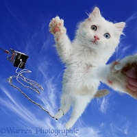Bungee Jumping cat selfie