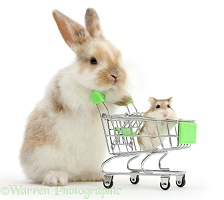 Young bunny shopping with Roborovski Hamster