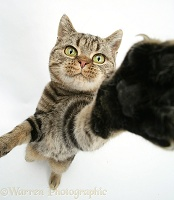 Talk to the Paw cat