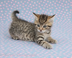 Cute playful tabby kitten on flowery background